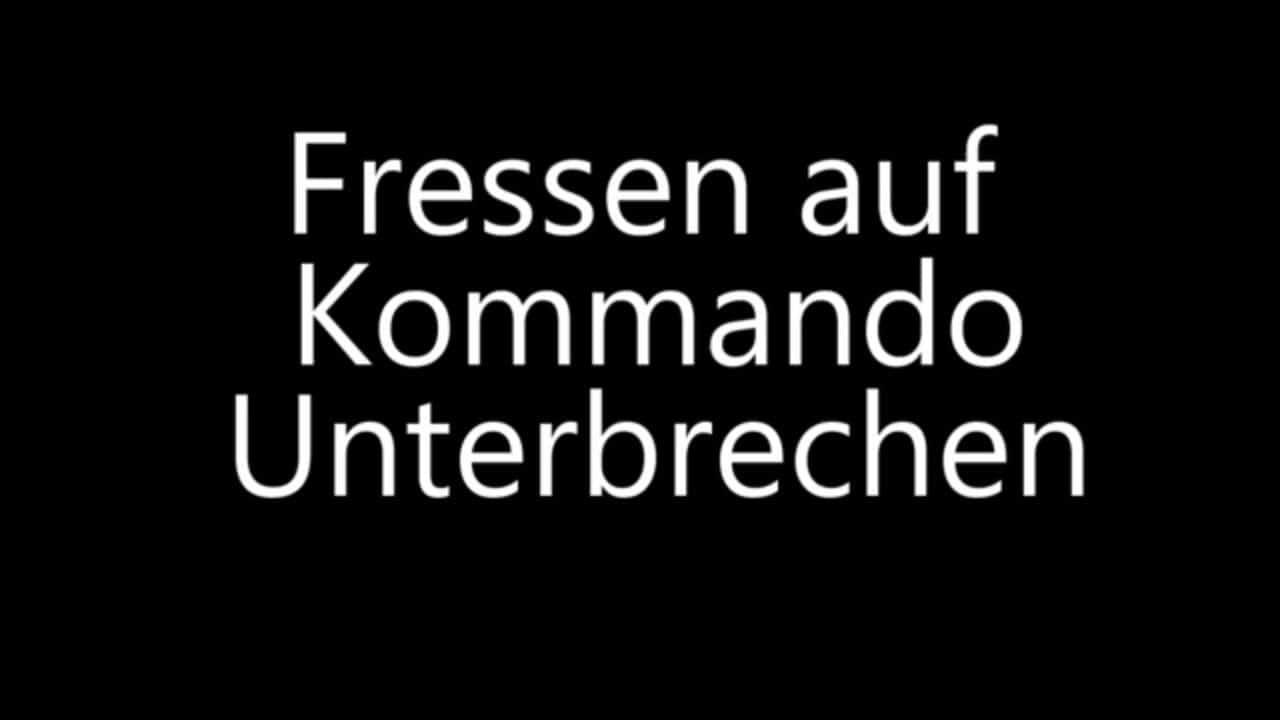 Rauhaardackel – Das Fressen auf Kommando unterbrechen