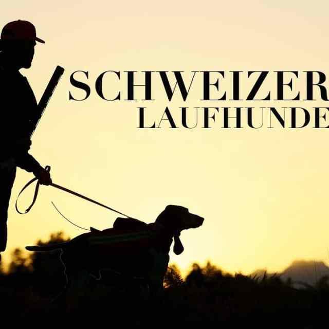 Schweizer Laufhunde - ein Kulturgut vor dem Aussterben...