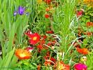 Claude Monet - Blandade blommor