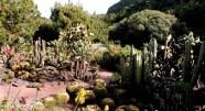 Kaktusområdet_redigerad-1