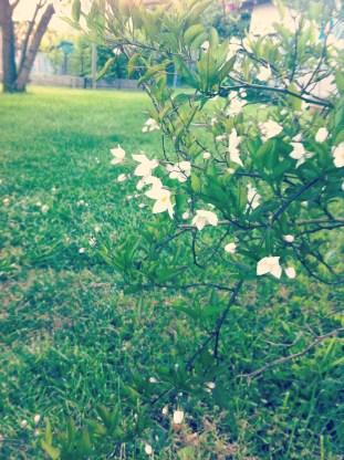 photo 2 - Copy (7)