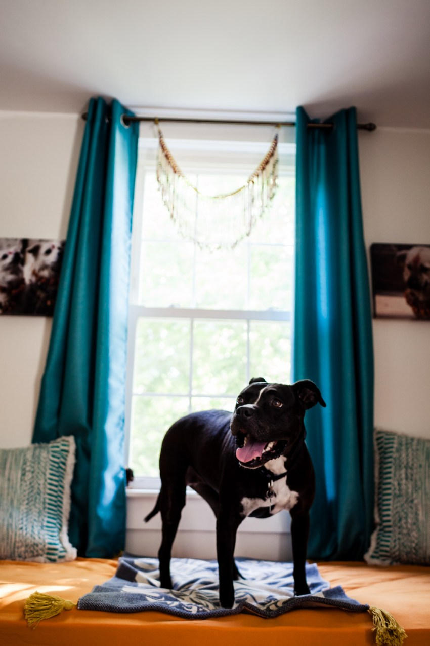 lucky dog resort editorial photography