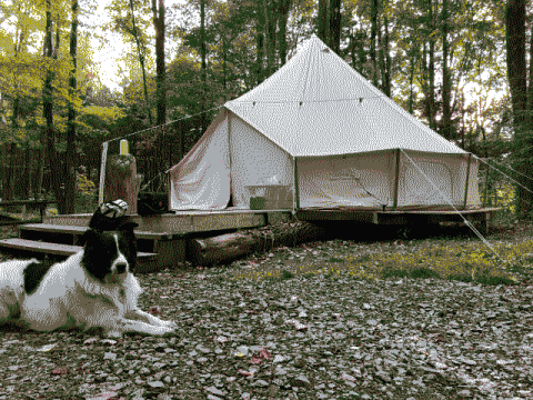A picture of our dog Finn in front of our yurt.
