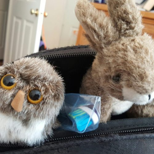 Plot Bunny and Herman Hootabout - Stowaways!