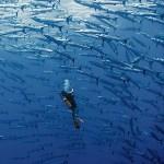 Underwater-Scenes