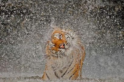 national-geographic-nature-2012-1