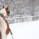 stock-photo-11042956-horse-pulling-sleigh
