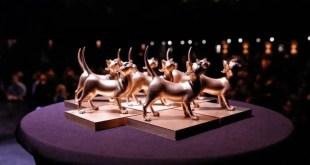 Découvrez la nouvelle portée de la 8e édition des Chatons d'Or