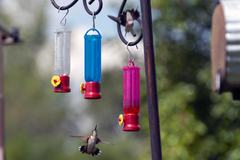 hangry hummingbirds