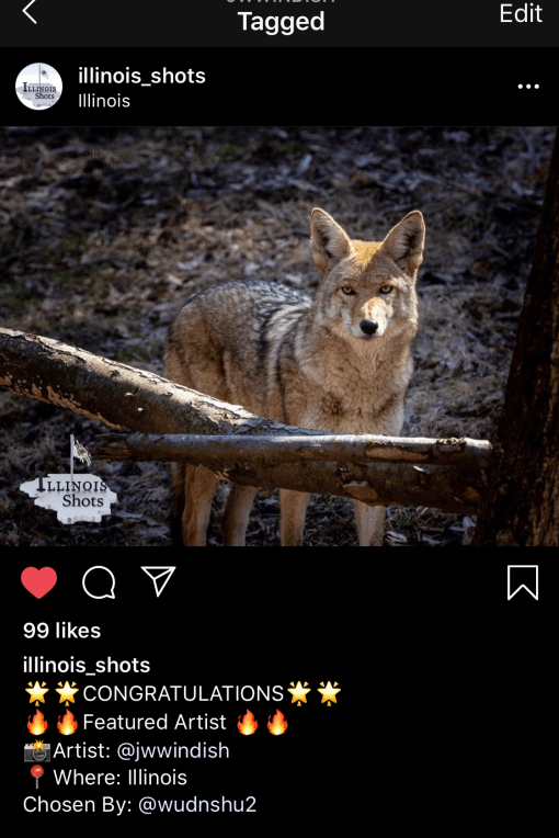 common coyote