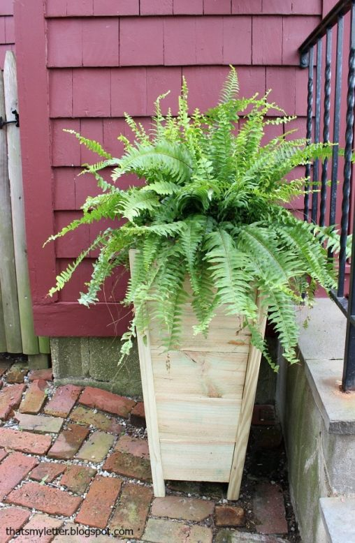 Tall Cedar Planter by Jaime Costiglio