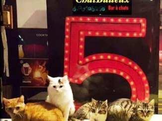 Le « Chat Bulleux », premier bar à chats à Dijon