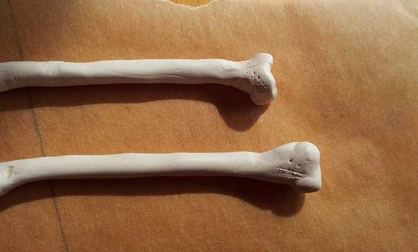 close up detail of femur bone