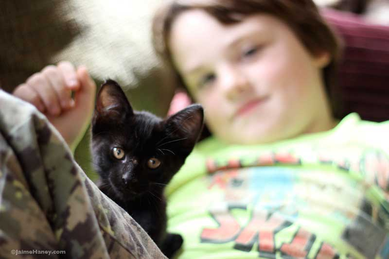 black kitten with boy in the background