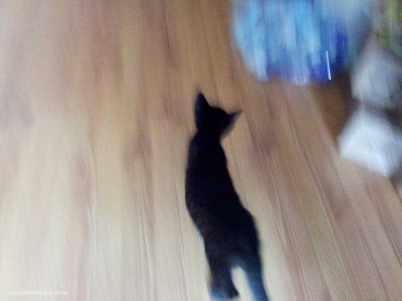 streaking kitten