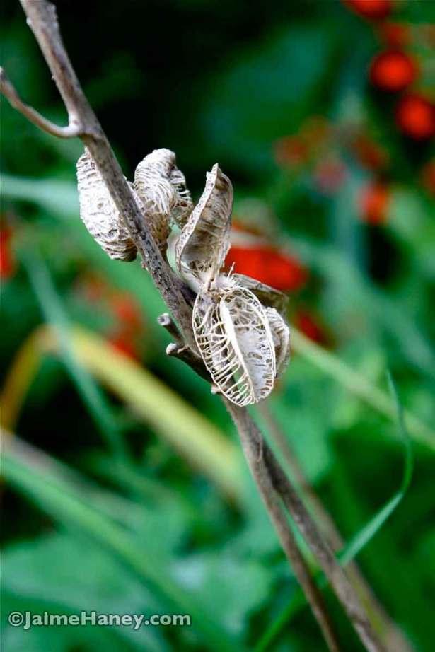 Daylily skeletons