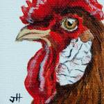 Rooster portrait