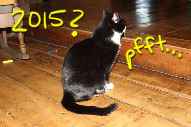 Mocee the Tuxedo cat annoyed