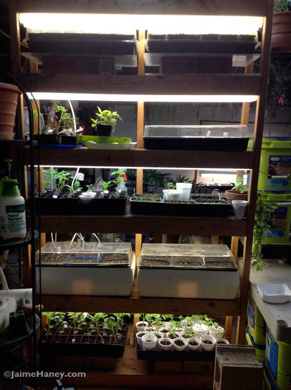 seed condo with all shelves that have lights being used to grow plants