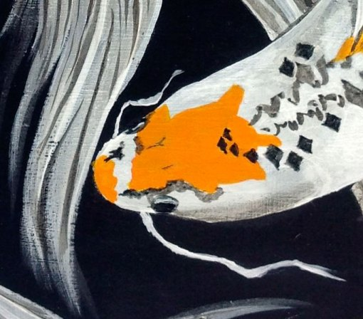 close up of white and orange fish of Harlequin Dance