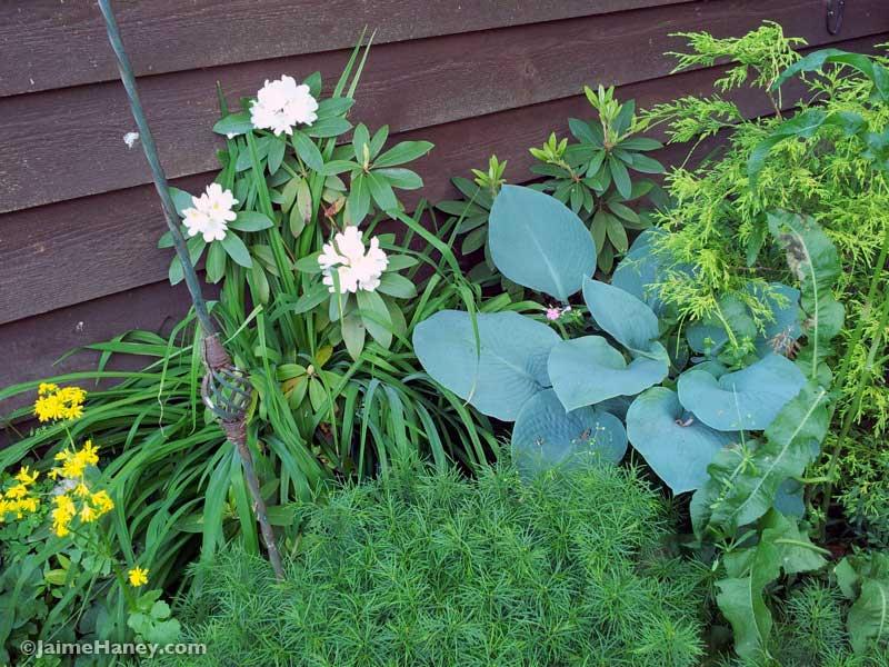plants against cedar house