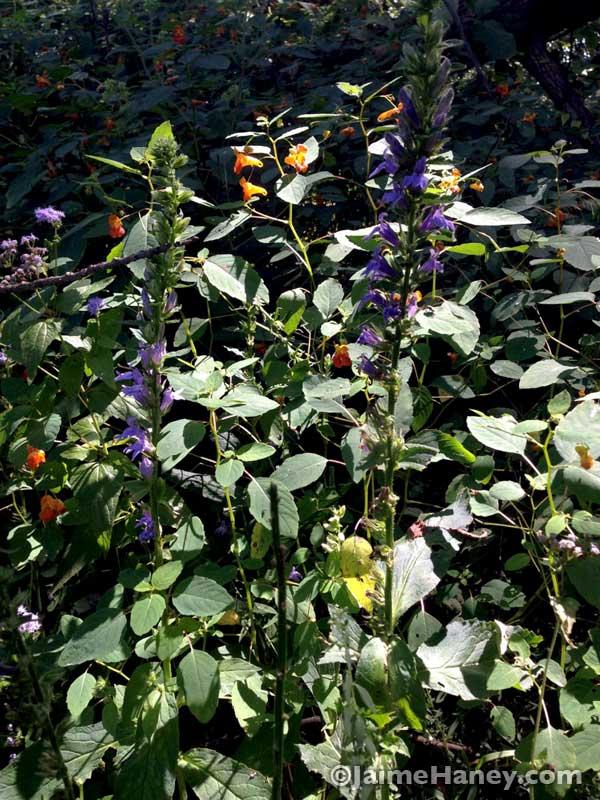 native Indiana flowers