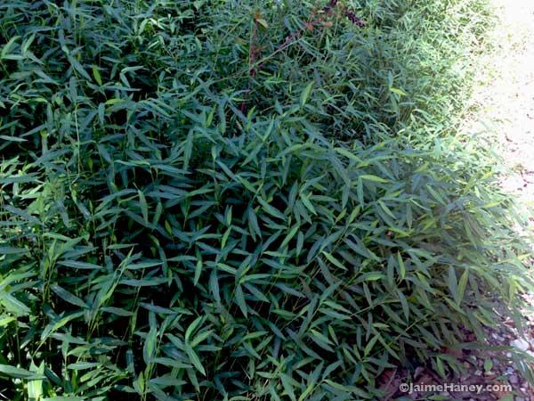 wild grasses growing