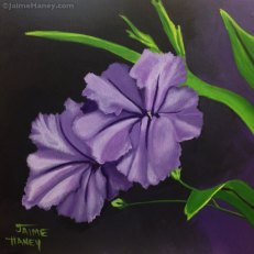 Two dusty purple Mexican Petunias painted with a dark dramatic background by artist Jaime Haney