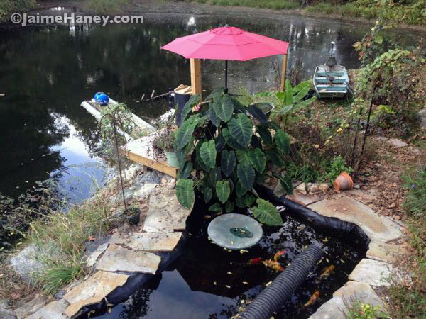 "The ""before"" photo of the koi pond with plain upcycled plastic patio table top"