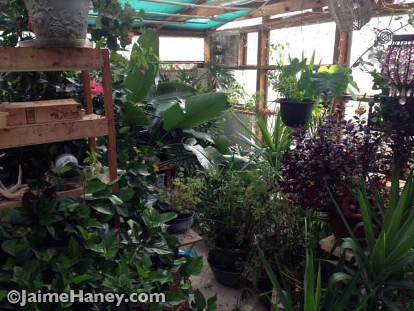 Plants crowded in the greenhouse