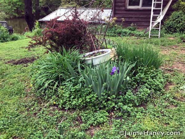septic garden