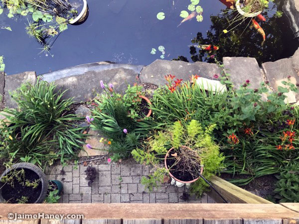 Looking straight down from deck to the plants that line the koi fish pond.