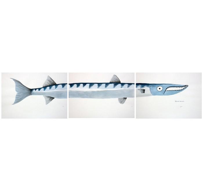 watercolor barracuda jaimesan