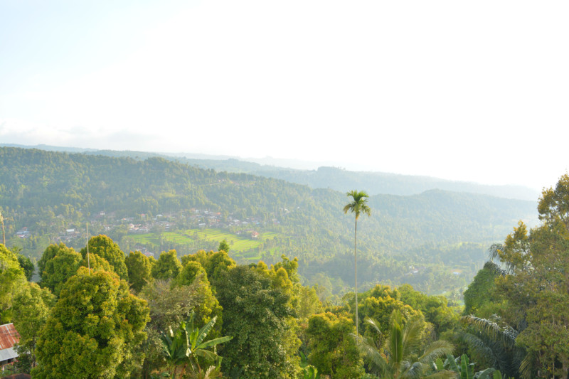 Bali Munduk view