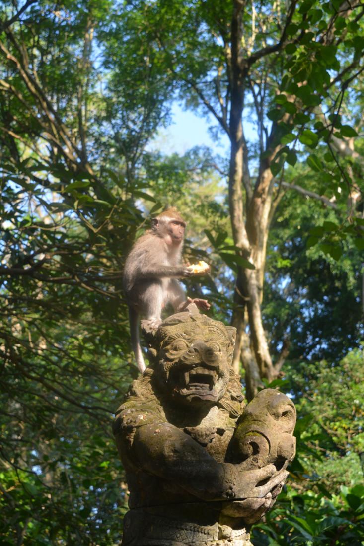 Monkey Forest Ubud Bali www.jaimyskitchen.nl