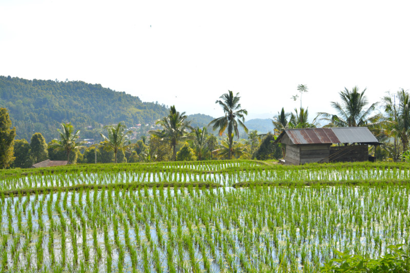 Munduk ricefield www.jaimyskitchen.nl