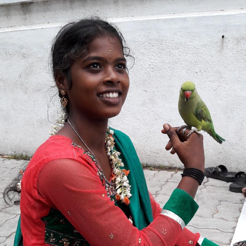 Tireuse de carte au perroquet à Pondicherry
