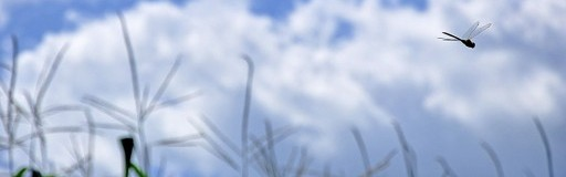 Libellule- A l'approche du départ