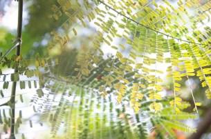 L'île de Camiguin - Philippines - Un petit vert le matin