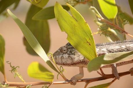 massif de l'Andringitra - Madagascar - Tour du Monde - jaiuneouverture
