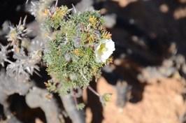 les fleurs du Namaqualand - Afrique du Sud - tour du monde - jaiunouverture