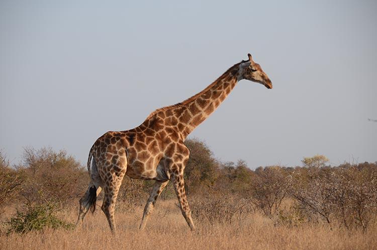 Le parc Kruger en famille - Jaiuneouverture (8)
