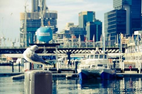 Sydney, mon amour - Jaiuneouverture - Tour du Monde (60)