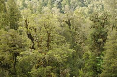 La jungle et les plages de la West Coast - Nouvelle Zélande - Jaiuneouverture Tour du Monde (15)
