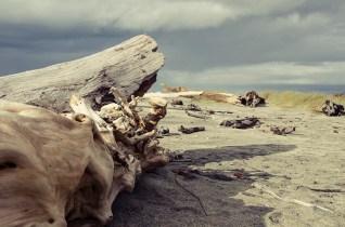 La jungle et les plages de la West Coast - Nouvelle Zélande - Jaiuneouverture Tour du Monde (6)