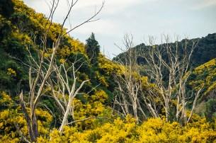 On a vu des otaries à Kaikoura - Nouvelle Zélande - Jaiuneouverture Tour du Monde (1)