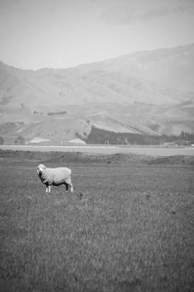 On a vu des otaries à Kaikoura - Nouvelle Zélande - Jaiuneouverture Tour du Monde (10) copy