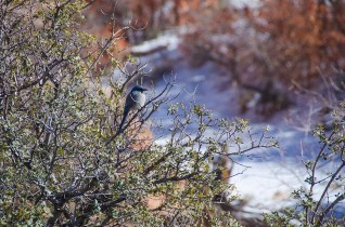 Zion National Park - Utah - USA (12)