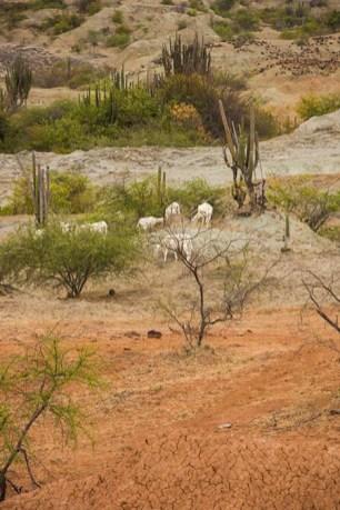 Desierto de la Tatacoa - Colombie (1) copy