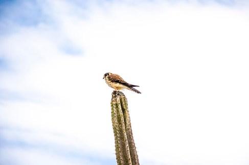Desierto de la Tatacoa - Colombie (20)